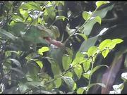 Iguanas, Millipedes & Bats