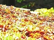 Fall Pathway in Macro
