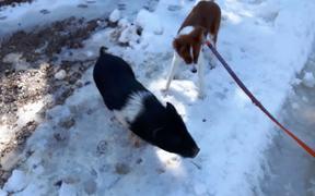 Kozmo Meets a Friend