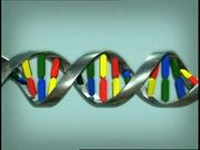 Animation - How DNA Works
