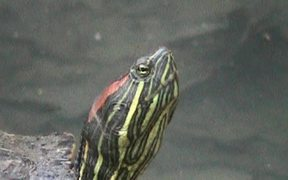 Turtle - Extreme Close Up