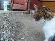 Rural Funny Cats
