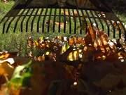 Raking Leaves in Macro