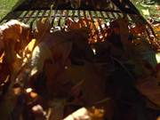 Raking Leaves in Macro