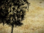 Dandelion - Animated Short by Klee Benally