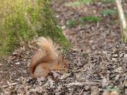 Squirrel at the Nature Reserve 4