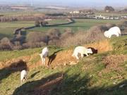 Lambs Enjoying the Evening Air