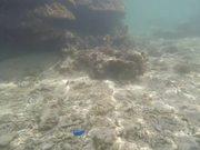 Gigantic Coral Reefs