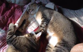 The Story of Two Cats p-t 1