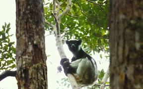 Island of Lemurs: Madagascar - Official Trailer