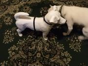 Smokey Meets Frenchie
