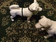 Smokey Meets Frenchie