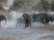 Elephants Like to to Bathe in the Sand
