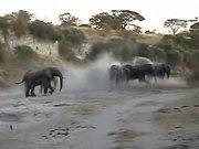 Elephants Like to to Bathe in the Sand