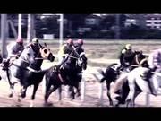 Horse's Race