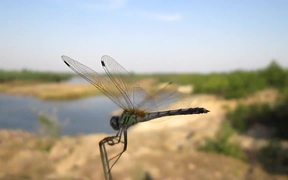A Cute Dragon Fly