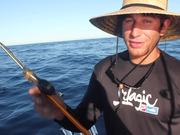 IGFA Great Marlin Race - Striped Marlin Tag