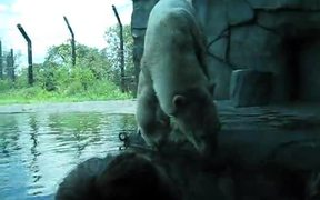 A Polar Bear Film