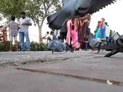 Pigeon feeding in an Indian Park