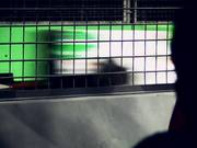 Behind the Fence - The Singapore F1 Grand Prix