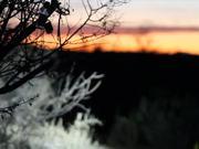 Kona 24 Hours in the Old Pueblo
