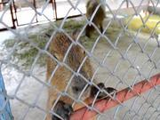 Capybara, What?