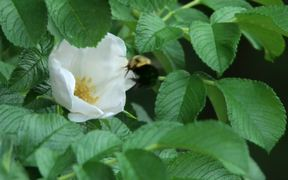 Summer Flowers, Holden, Maine