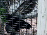Blank Park Zoo