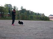 Tunnellek & Klara, Färdiga/race