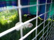 First Grass of the Summer