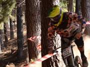 Aussie DH Nationals - Rnd 3 Bright
