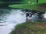 Funny Huskies Taking Its Bath