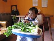 Bruno Meets Celery