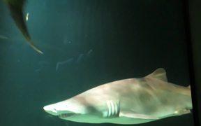Baltimore Aquarium - Sharks