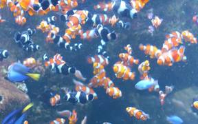 Finding Nemo and Dory