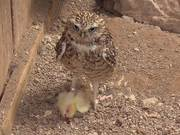 Kington Owl Centre
