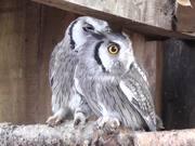 Kington Owl Centre