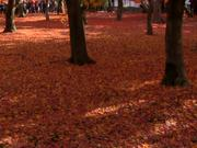 Autumn-Wonderland-Tōfuku-ji-Kyoto