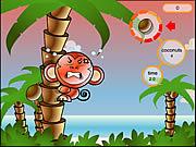 Cocoon Island