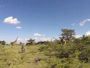 Giraffe Ride - First real day in Kenya