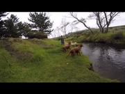 Dogs Day Out - a Rainy Day at the Creek..