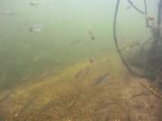 Underwater Showreel - Jack Perks