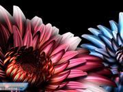Showreel 2012 - Celia Lignon