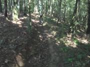 The Virginia Mountain Bike Trail