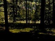 Czech MTB Guide - 4 - Singltrek pod Smrkem