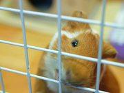 Guinea Pig Mocha's Diary 27/06/12