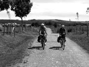 Back on the Camino