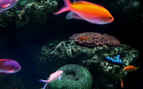 Fishes and Corals