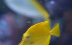 Cute Little Yellow Fish
