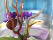 Hawaiian Shrimp And Snails Timelapse